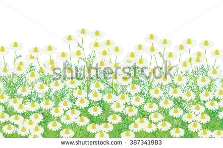 Asteraceae Stock Vectors, Images & Vector Art.