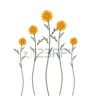 384 Asteraceae Cliparts, Stock Vector And Royalty Free Asteraceae.