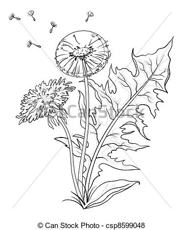Asteraceae Illustrations and Clipart. 353 Asteraceae royalty free.