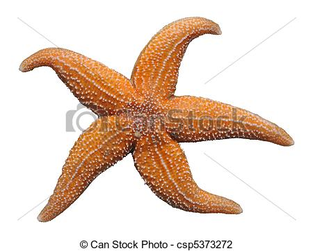 Stock Photo of Isolated starfish.