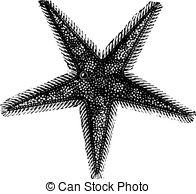 Asteroidea Vector Clipart Royalty Free. 10 Asteroidea clip art.