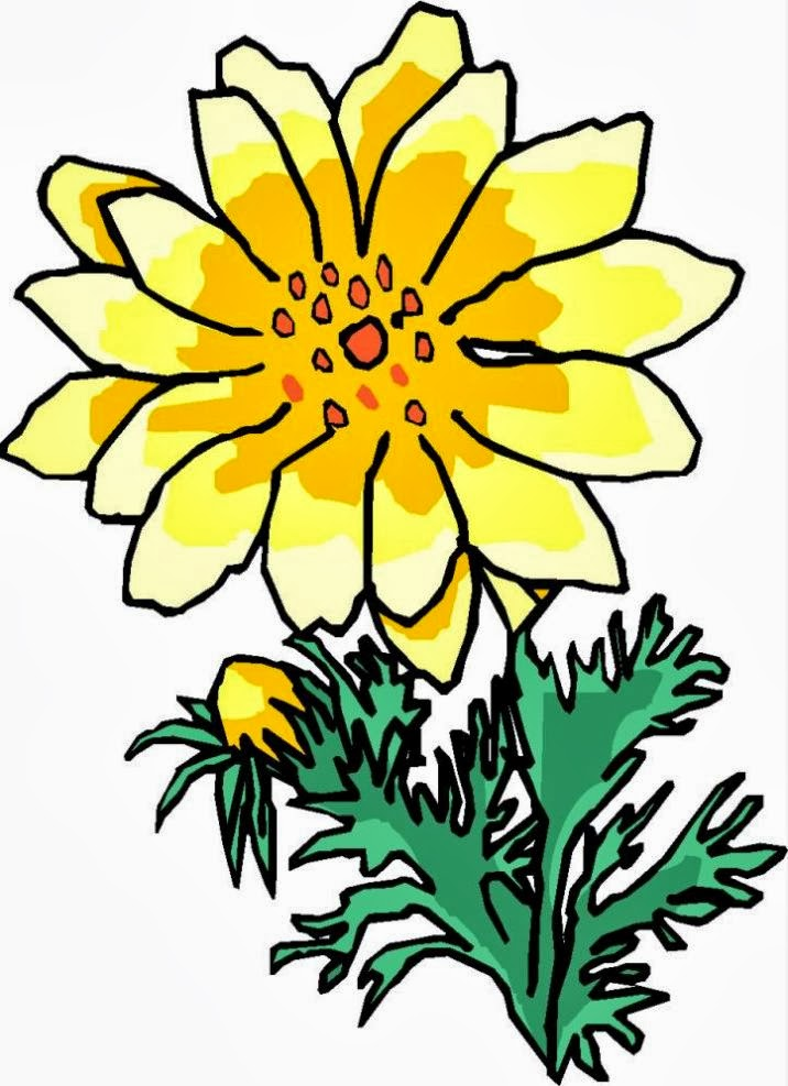 Aster Flower Drawing.
