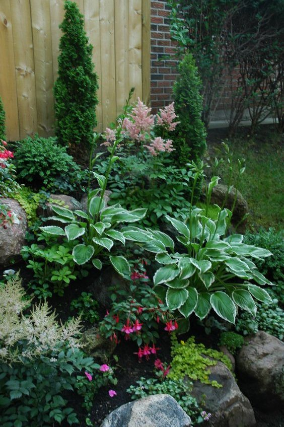 Shade garden plants, astilbes, hostas, fuchsias, creeping jenny.