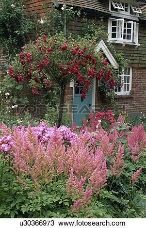 Stock Photo of Red standard rose tree and pink astilbe in front.