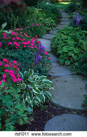 Stock Photography of Stone path in private garden with columbine.