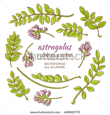 Astragalus Stock Photos, Royalty.