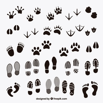 Footprint Vectors, Photos and PSD files.