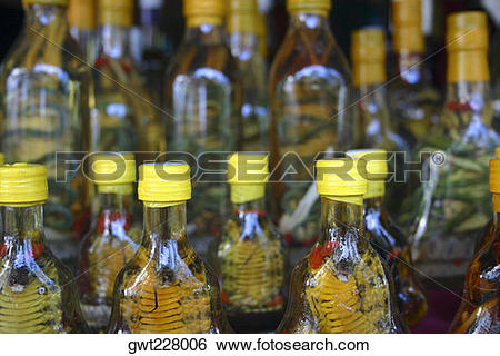 Stock Images of Preserved snakes in jars, Chiang Khong, Thailand.
