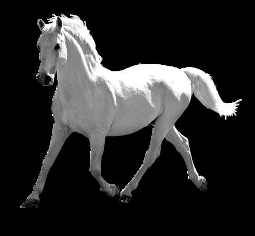 At Arabası ve at png resimleri, Arkafon saydam beyaz at resimi.