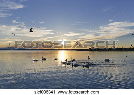 Stock Photography of Germany, Bavaria, evening at Chiemsee.