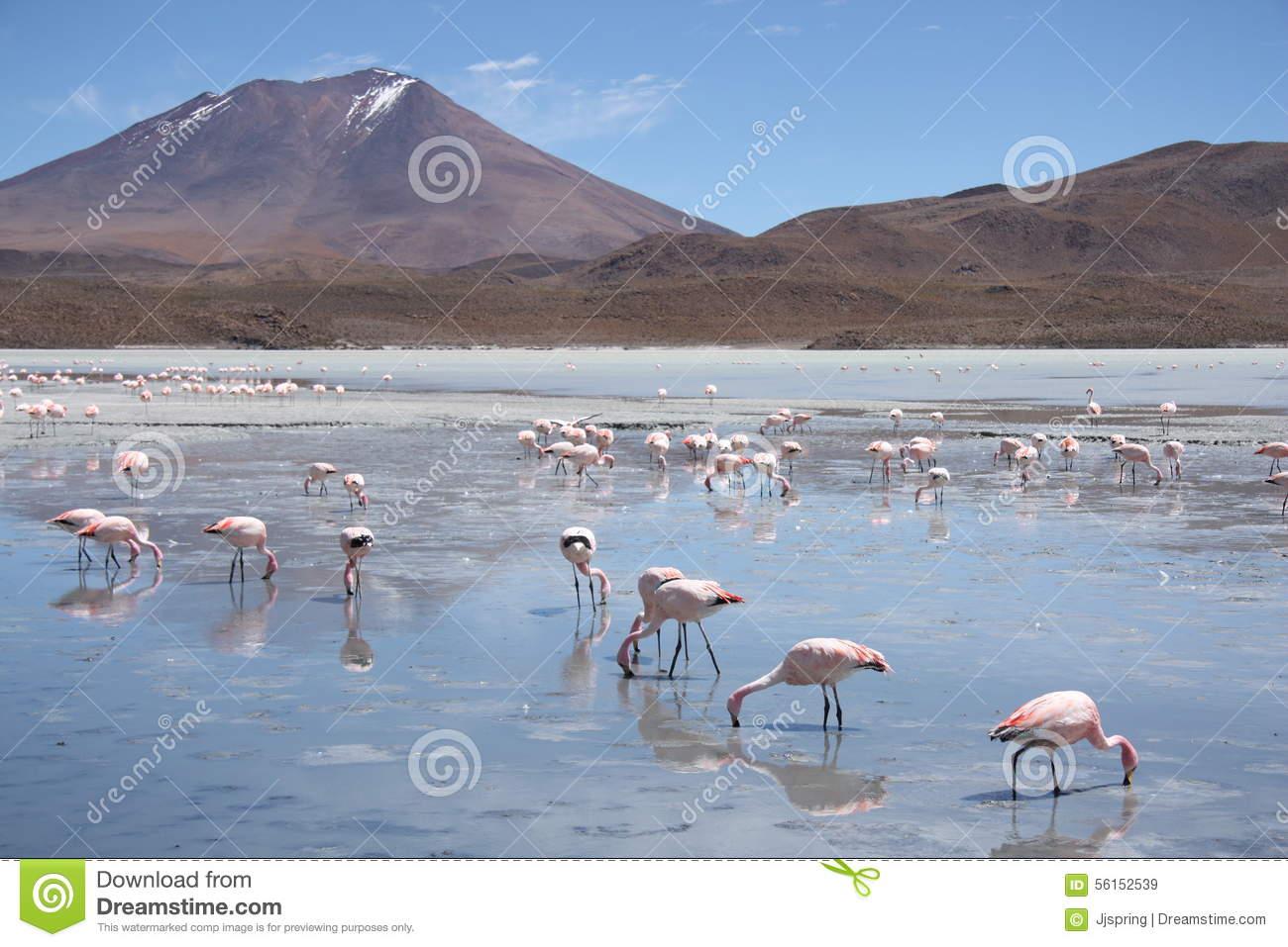 Atacama desert clipart.
