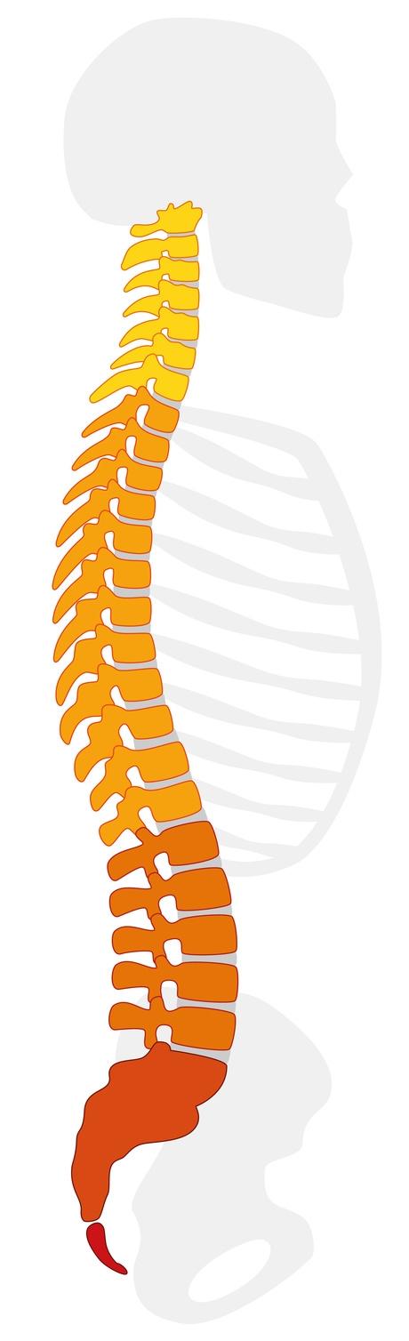 Rückenprobleme als Grund sich in seiner Haut nicht mehr wohl zu.