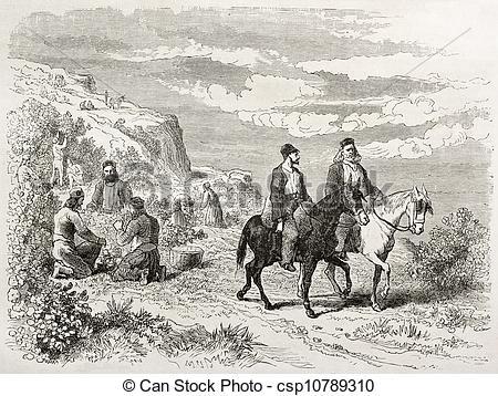 Clipart of Hazelnut harvesting on Mount Athos, old illustration.