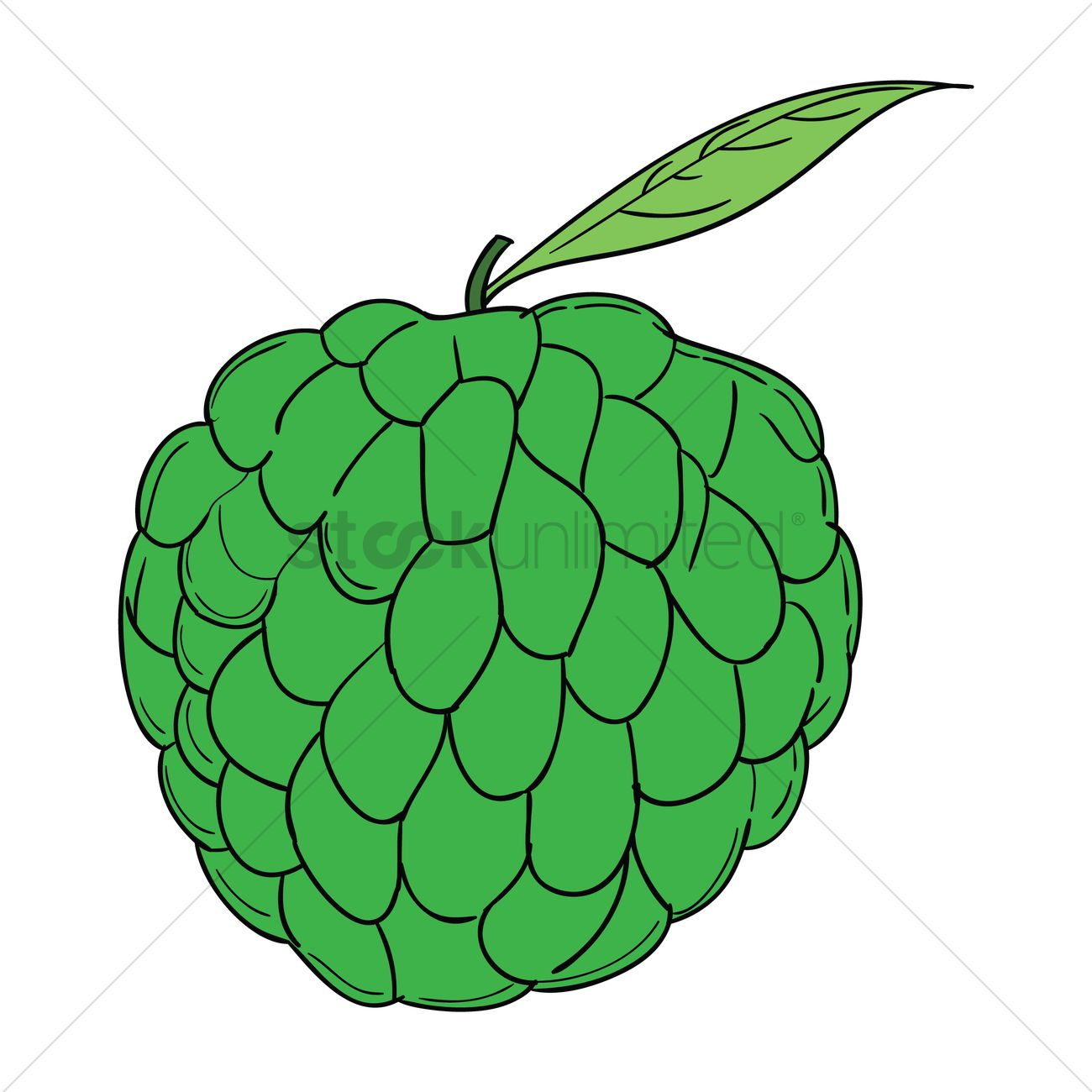 Atis clipart 5 » Clipart Station.