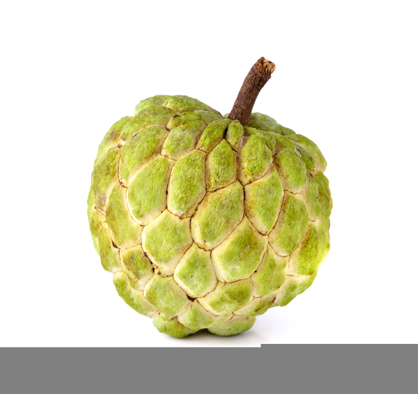 Picture Of Atis Clipart.