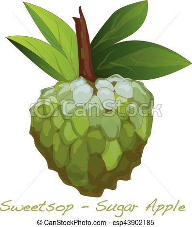 Sugar Apple vector.