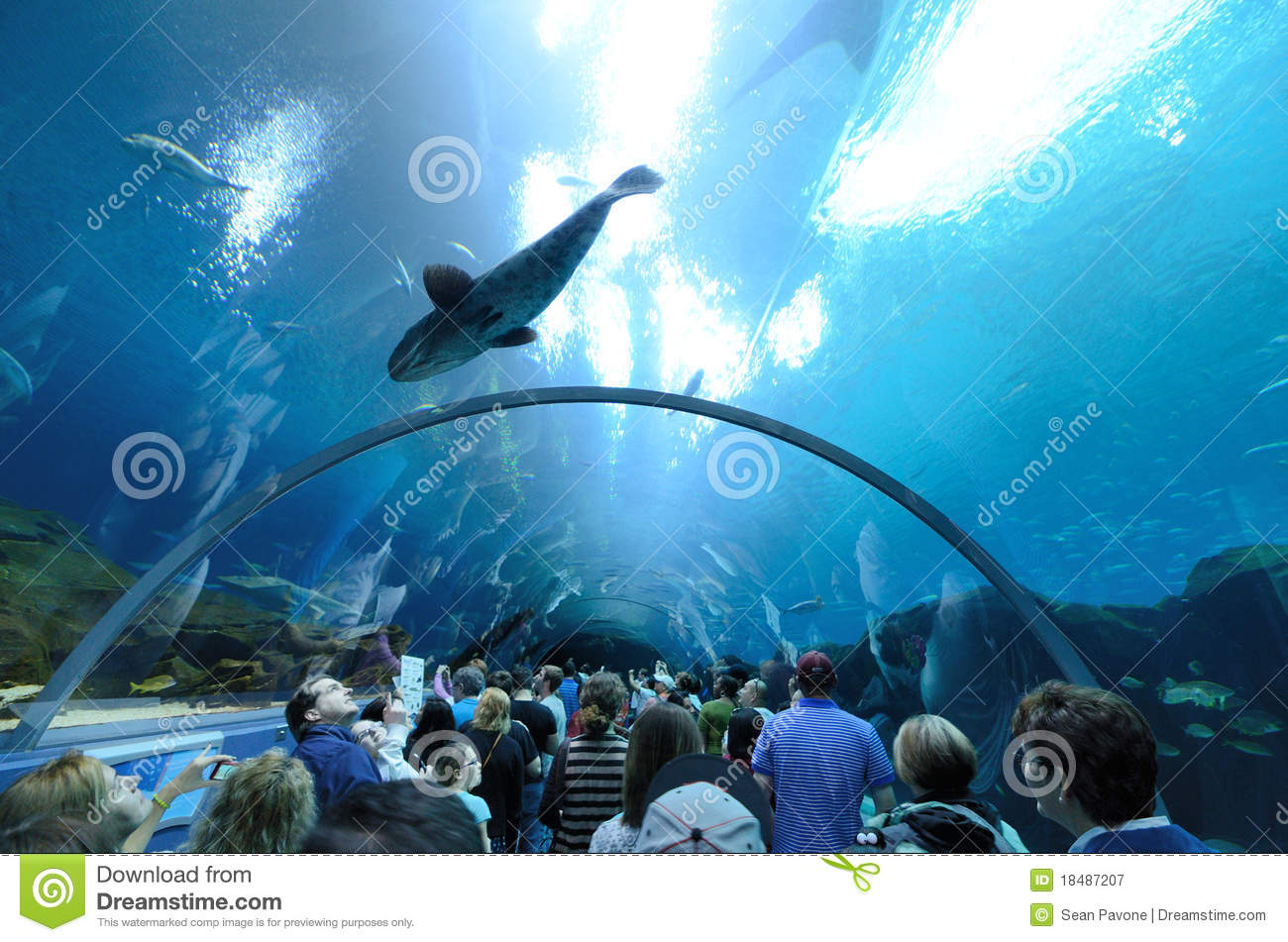 The Georgia Aquarium And Hard Rock Cafe In Downtown Atlanta, Ga.
