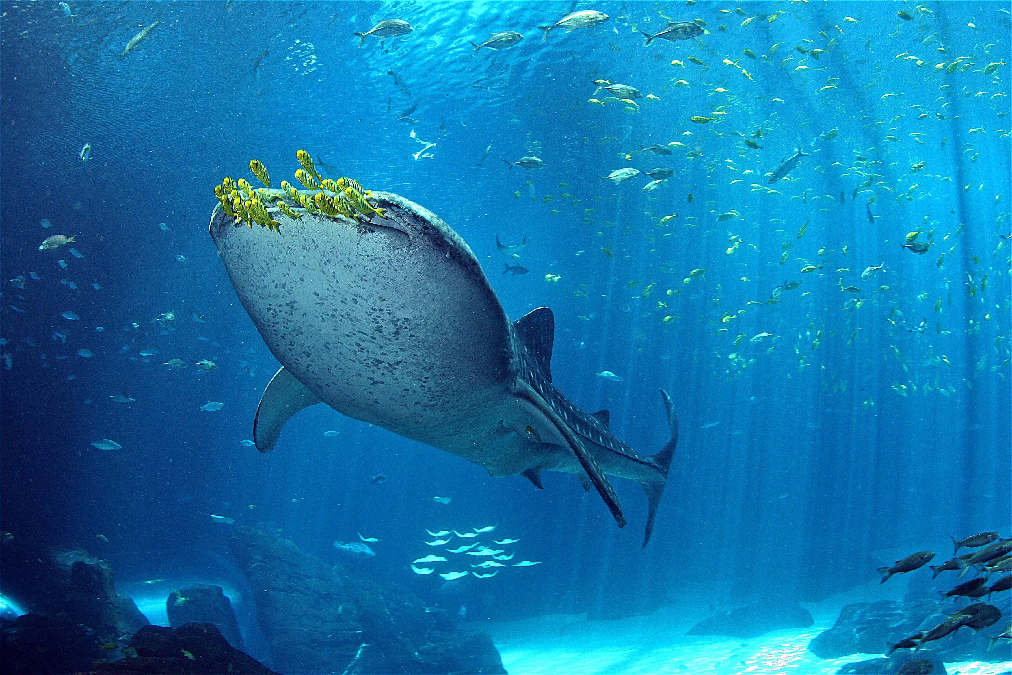 Georgia Aquarium and Emory University Team Up on Landmark Genome.
