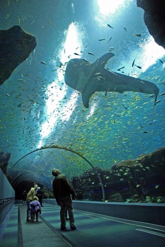 Georgia aquarium clipart.