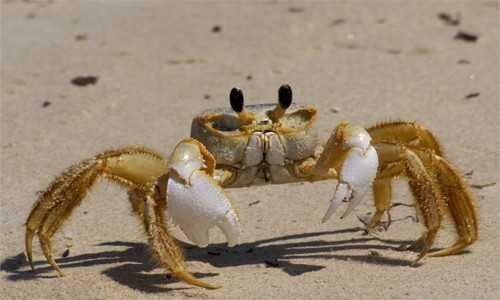 1000+ images about crustaceans project inspiration on Pinterest.
