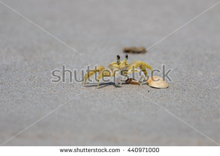 Ghost Crab Shot Wideangel Beach On Stock Photo 63213313.