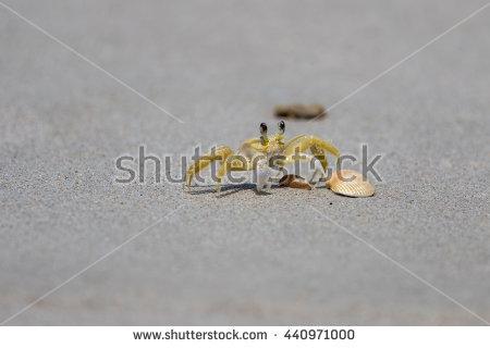 Ghost Crab Shot Wideangel Beach On Stock Photo 63213313.
