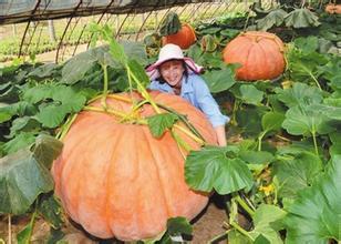 Happy Pumpkin Promotion.