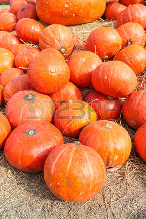 Giant Pumpkin Stock Photos & Pictures. Royalty Free Giant Pumpkin.