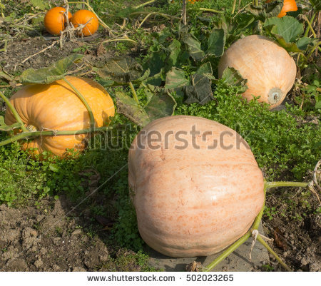 Winter Allotment Stock Photos, Royalty.