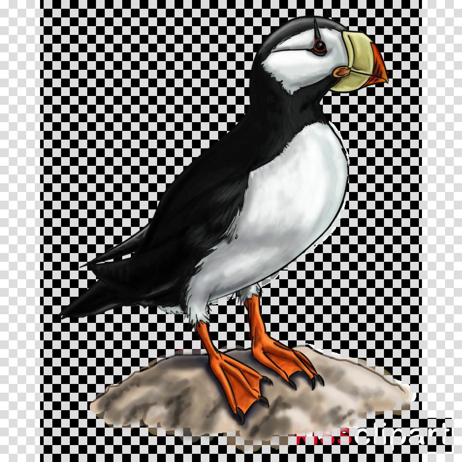 bird puffin atlantic puffin beak seabird clipart.