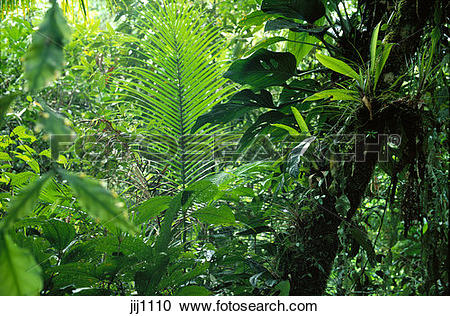 Stock Photography of Atlantic rainforest in Serra do Mar mountains.