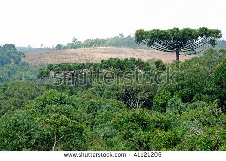Internal View Atlantic Forest Vegetation On Stock Photo 67539031.