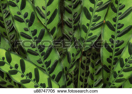 Stock Image of Leaf patterns in rainforest understory plants.