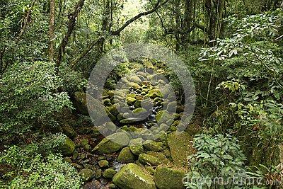 Brazil Rainforest Stock Photo.
