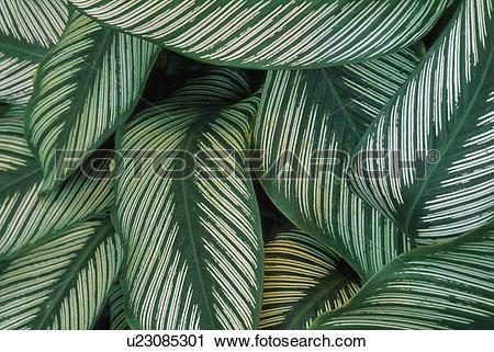 Stock Photography of Rainforest vegetation, Atlantic Rainforest.