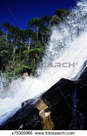 Stock Images of Brazil, Parana State, Atlantic rainforest.