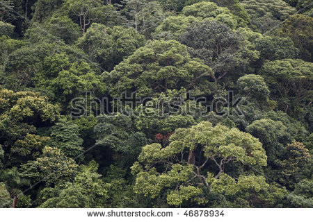 Atlantic Forest Stock Photos, Royalty.