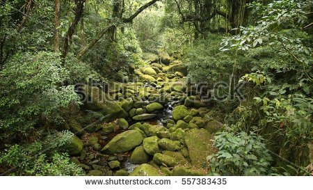 Brazil Jungle View Mata Atlantica Atlantic Stock Photo 247833382.