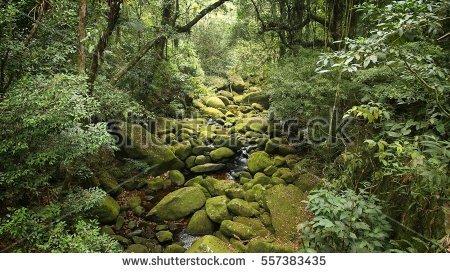 Brazil Jungle View Mata Atlantica Atlantic Stock Photo 247833382.