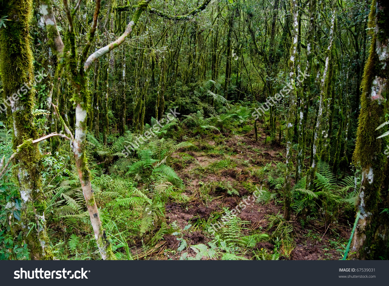 Internal View Atlantic Forest Vegetation On Stock Photo 67539031.