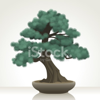 Blue Atlas Cedar Bonsai stock vectors.
