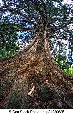 Stock Photo of blue atlas cedar tree in queenstown gardens in new.