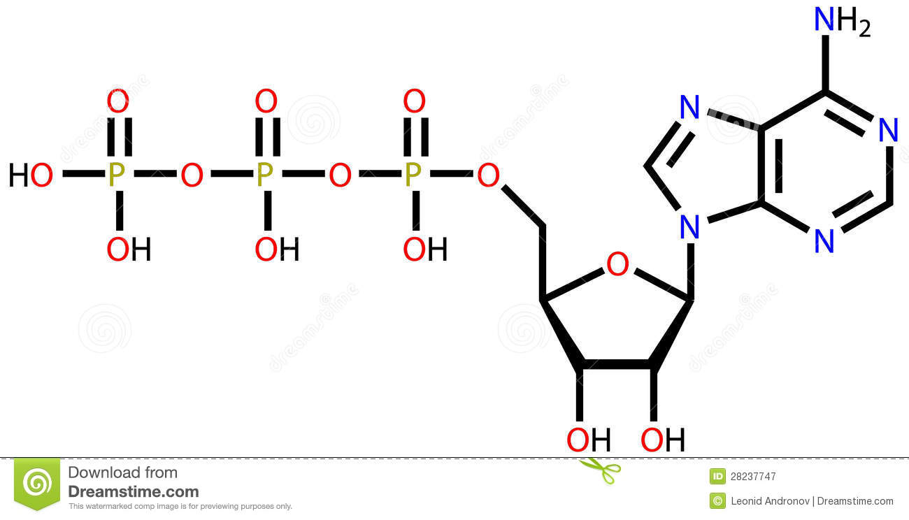 Adenosine Triphosphate (ATP) Structural Formula Royalty Free Stock.