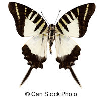 Species Stock Photo Images. 78,484 Species royalty free images and.