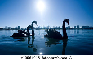 Freshwater animals Images and Stock Photos. 13,713 freshwater.