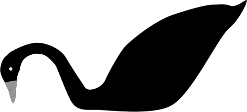 Cygnus atratus (Black Swan).