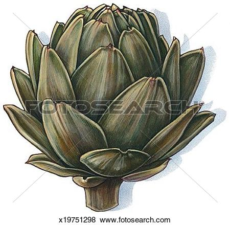 Artichoke Clip Art and Stock Illustrations. 164 artichoke EPS.