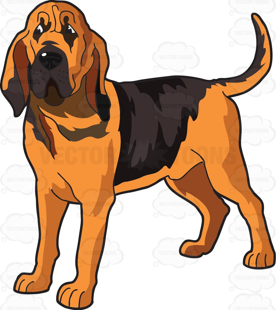 An Attentive Bloodhound Cartoon Clipart.