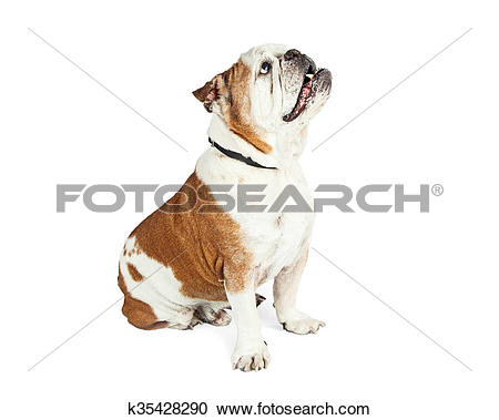 Stock Photography of Attentive Dog Sitting Side Looking Up.