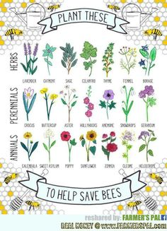 For the Love of Bees, Birds & Butterflies on Pinterest.